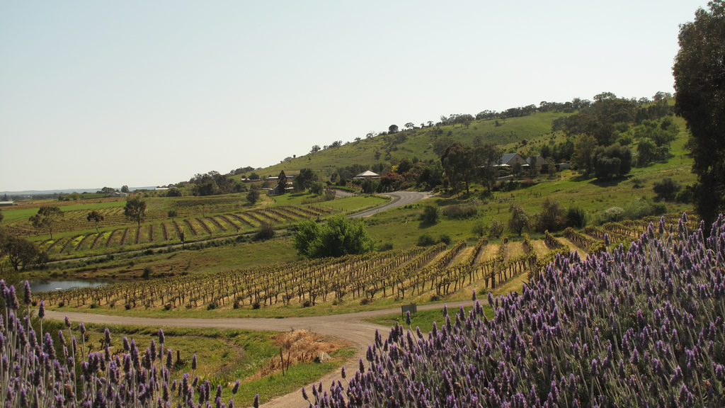 barossa-valley